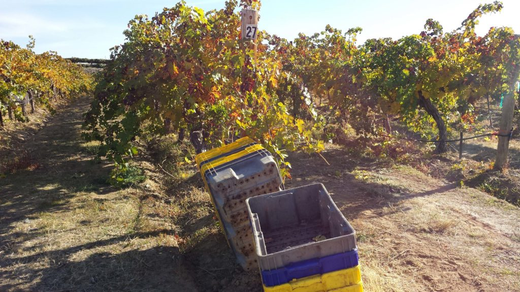 Our Vineyards